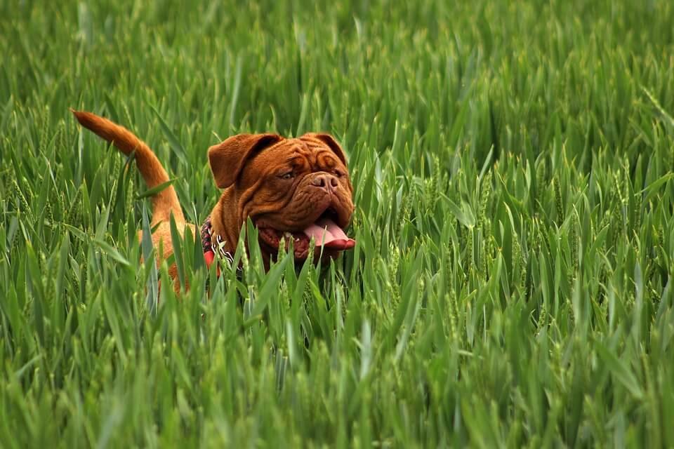 Jak dobrać pastuch dla psa?