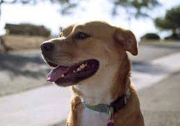 Dlaczego warto monitorować psa?