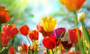 Obrazy na płótnie z kwiatami – do jakich wnętrz?
